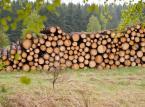 Będzie konstytucyjna <strong>ochrona</strong> lasów?