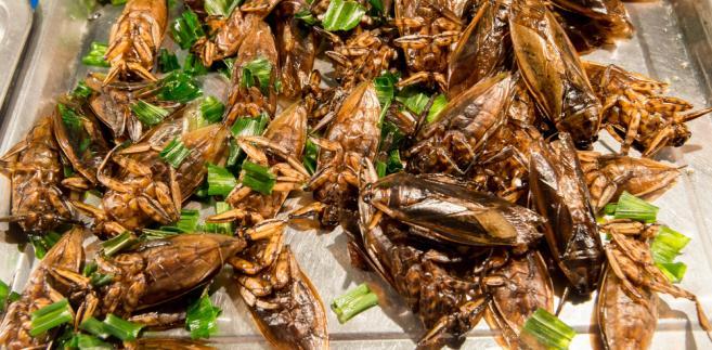 smażone robaki