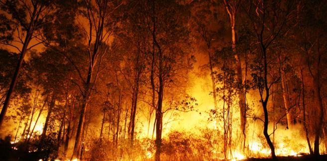 Rozprzestrzenianiu się płomieni sprzyjają utrzymujące się w tym położonym nad Pacyfikiem stanie wysokie temperatury, niska wilgotność oraz wiatr.
