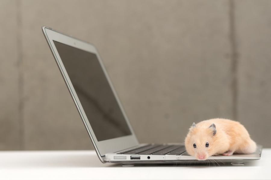 chomik, internet, komputer