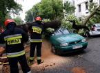 Gwałtowna burza nad Warszawą: Powalone drzewa, jedna osoba ranna. Zakłócenia w kursowaniu pociągów