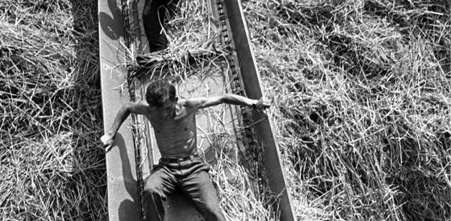 Młodzi z OHP pracujący podczas żniw w PGR w Sośnicy, 1967 r.